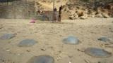 وزارة البيئة تنشر8 نصائح لإسعاف «لسعات قنديل البحر»
