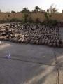 بالصور .. بيان عاجل من الجيش المصري الان